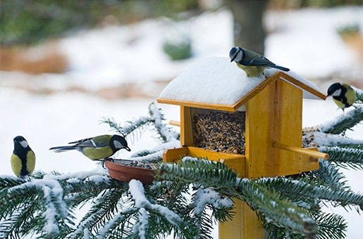 Attracting Birds In Cold Months