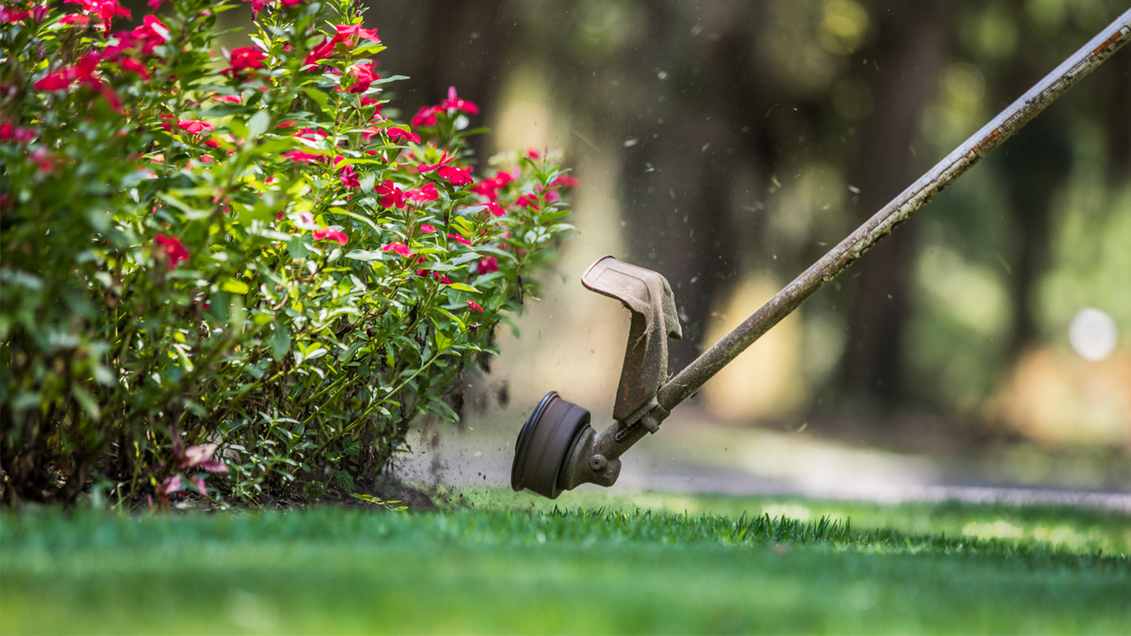 Lawn Maintenance Services in South Carolina 5